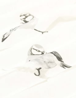 VISERRYS vaaleaharmaa